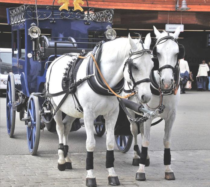 carrozzella cavalli turismo