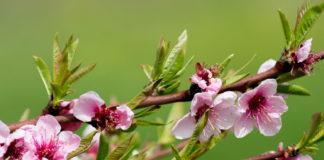 fiore fiori