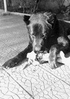 cane 11 PCatino