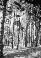 foresta 7 Vittorio Leone