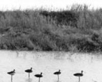 uccelli 26 PCatino