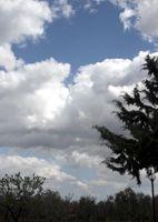 Nuvole 50 PCatino
