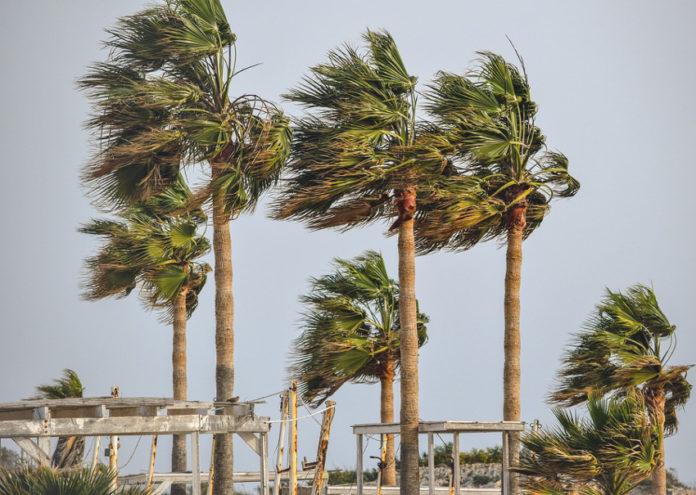 palme vento alberi