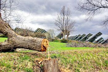 Nuovi alberi (foto Gianfranco Marzetti)