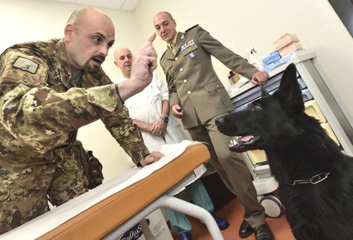 veterinari esercito