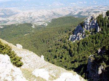 La foresta dei Temponi vista dalla vetta del Cervati è destinata a scomparire