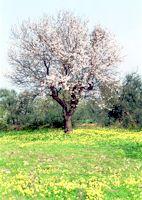 Biodiversita 57 PCatino