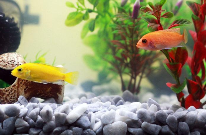 pesci acquario mare