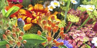 fiori estate polline