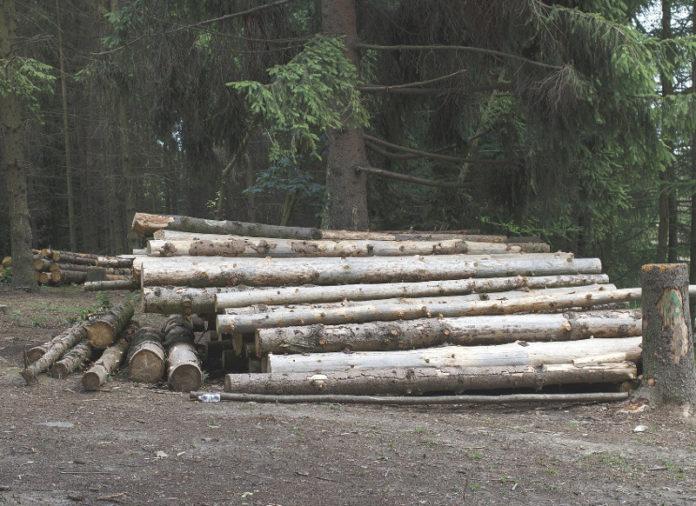 disboscamento reati ambiente