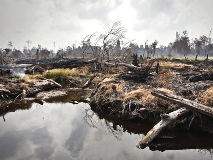 foto Ulet Ifansasti-Greenpeace