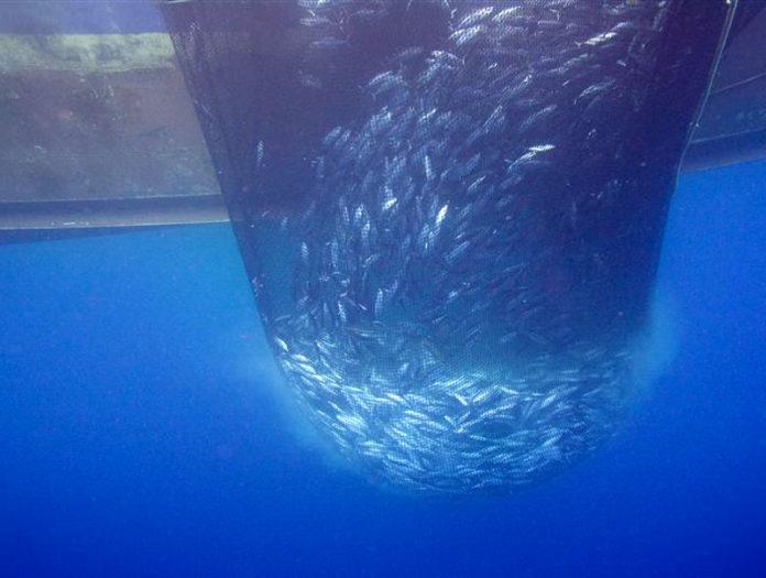pesca mare