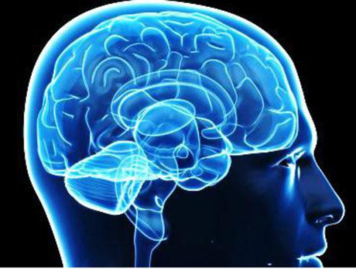amore cervello