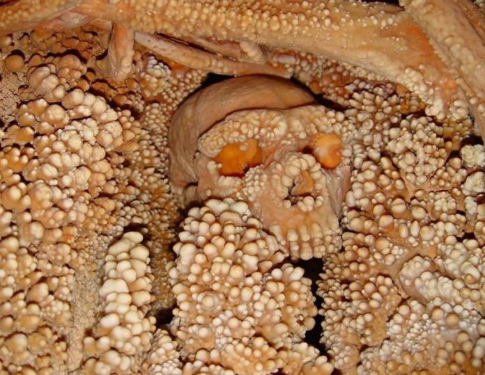 foto Soprintendenza archeologia Puglia
