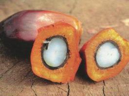 olio palma aidepi