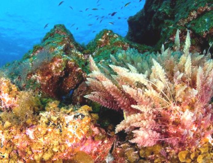 mare sub