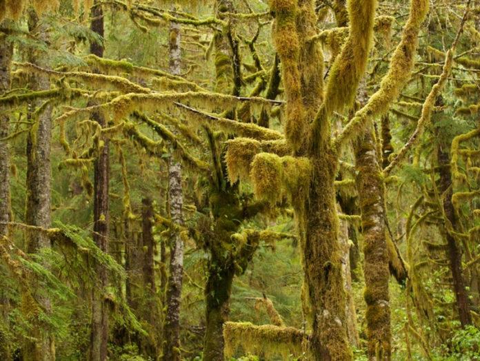Foresta_Grande_Orso_Canada