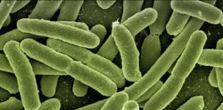 coli batteri