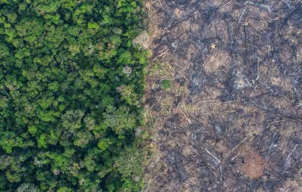 disboscamento brasile