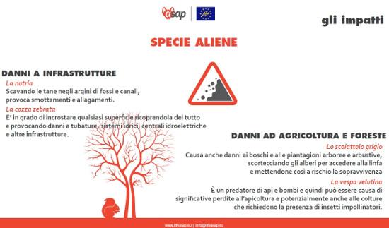 Aliene6