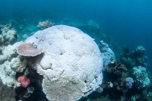 coralli sbiancati1