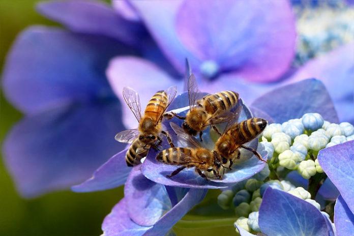 api fiore