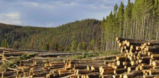 Deforestazione legno illegale