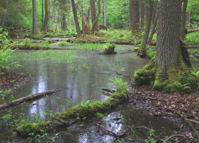 Parco Bialowieza foresta Adam Łavnik Wwf Polonia