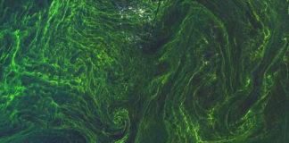 alghe dallo spazio esa 82