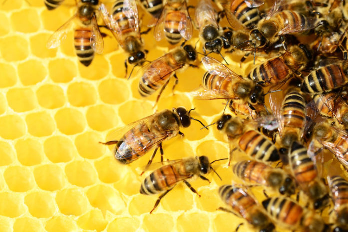 api alveare miele