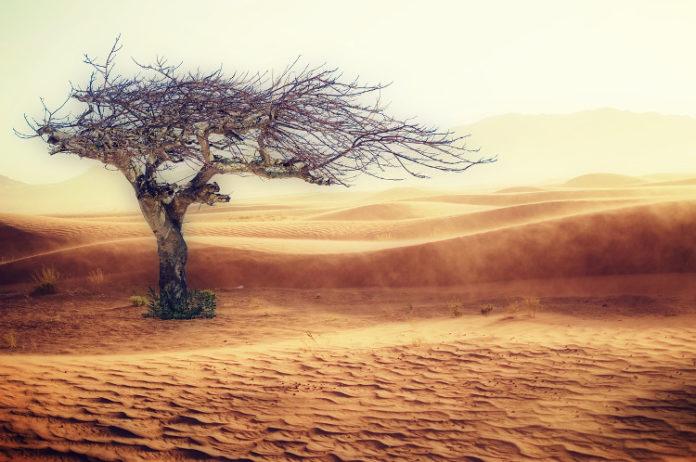desertificazione campagna vento