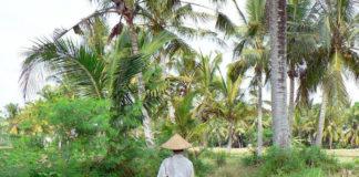 indonesia foresta
