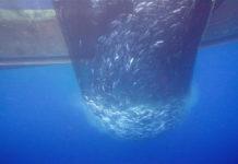 mare pesca 82