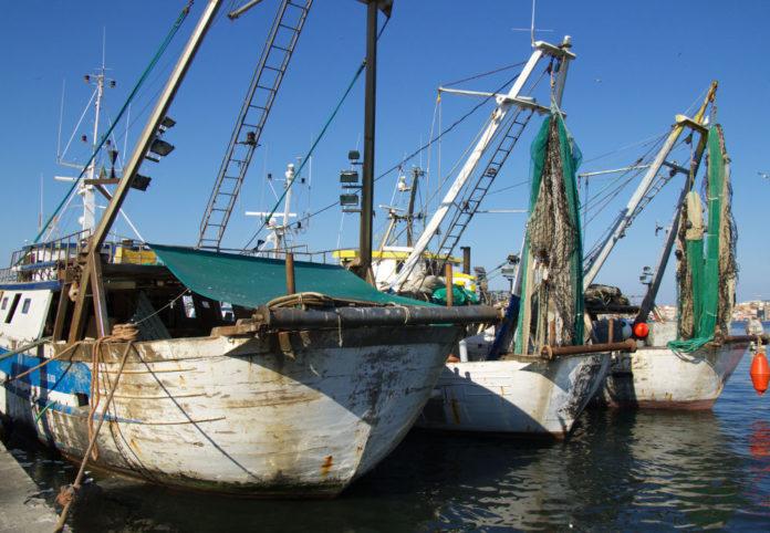 pescherecci mare pesca 82