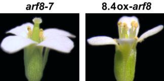 scoperta gene piante