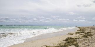 spiaggia mare posidonia