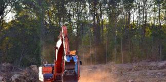 alberi boschi deforestazione
