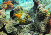 barriera corallina mare