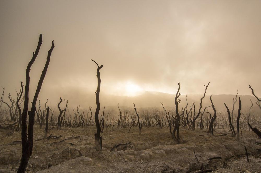 Risultati immagini per Cambiamenti climatici 2018 - I danni causati all'ambiente