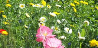 biodiversità 42 2008