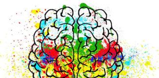 cervello inquinamento 41 2008