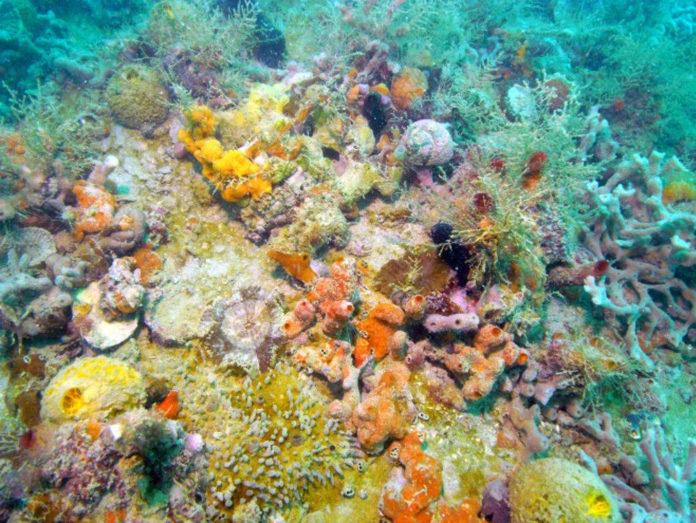 concrezioni calcaree coralligeno trezze