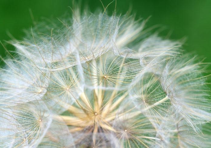 semi seme agricoltura vita