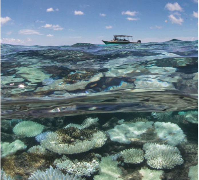 coralli indonesia