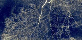 rete di funghi wood wide web