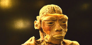 cervello impulsi primitivi
