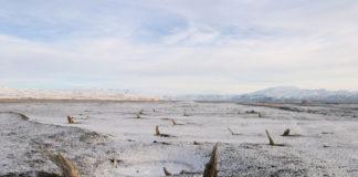fossili nel permafrost siberia