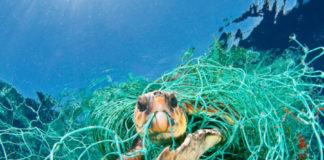 Loggerhead turtle (Caretta caretta) trapped in a drifting abando