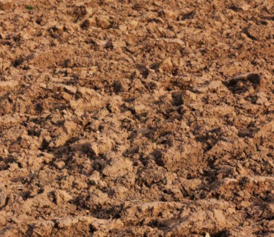fanghi agricoltura