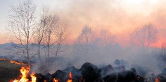 incendio clima bosco